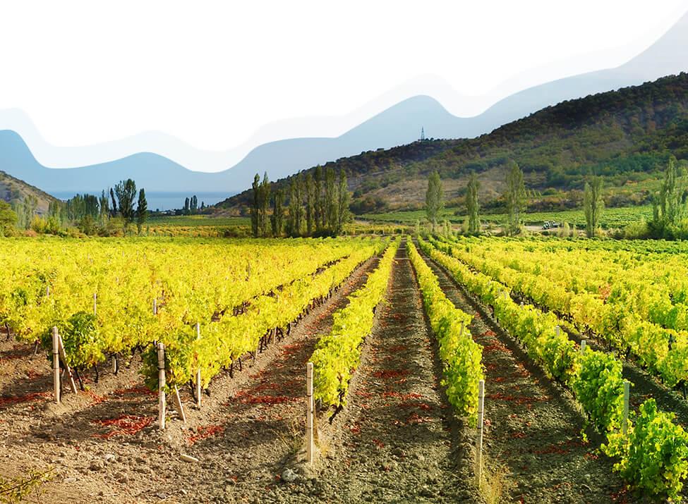 Příběh našich znojemských vinic